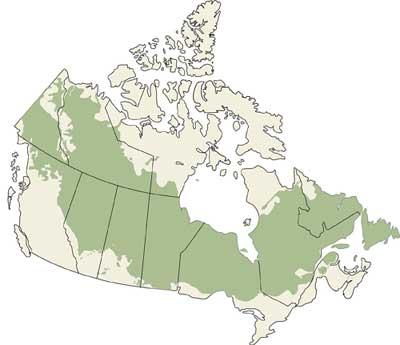 Boreal-canada