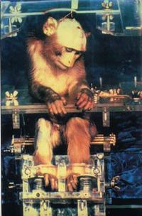 Monkey_electroshock_2
