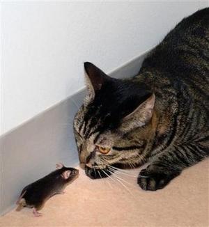 2007_11_08t005144_414x450_us_mice_2